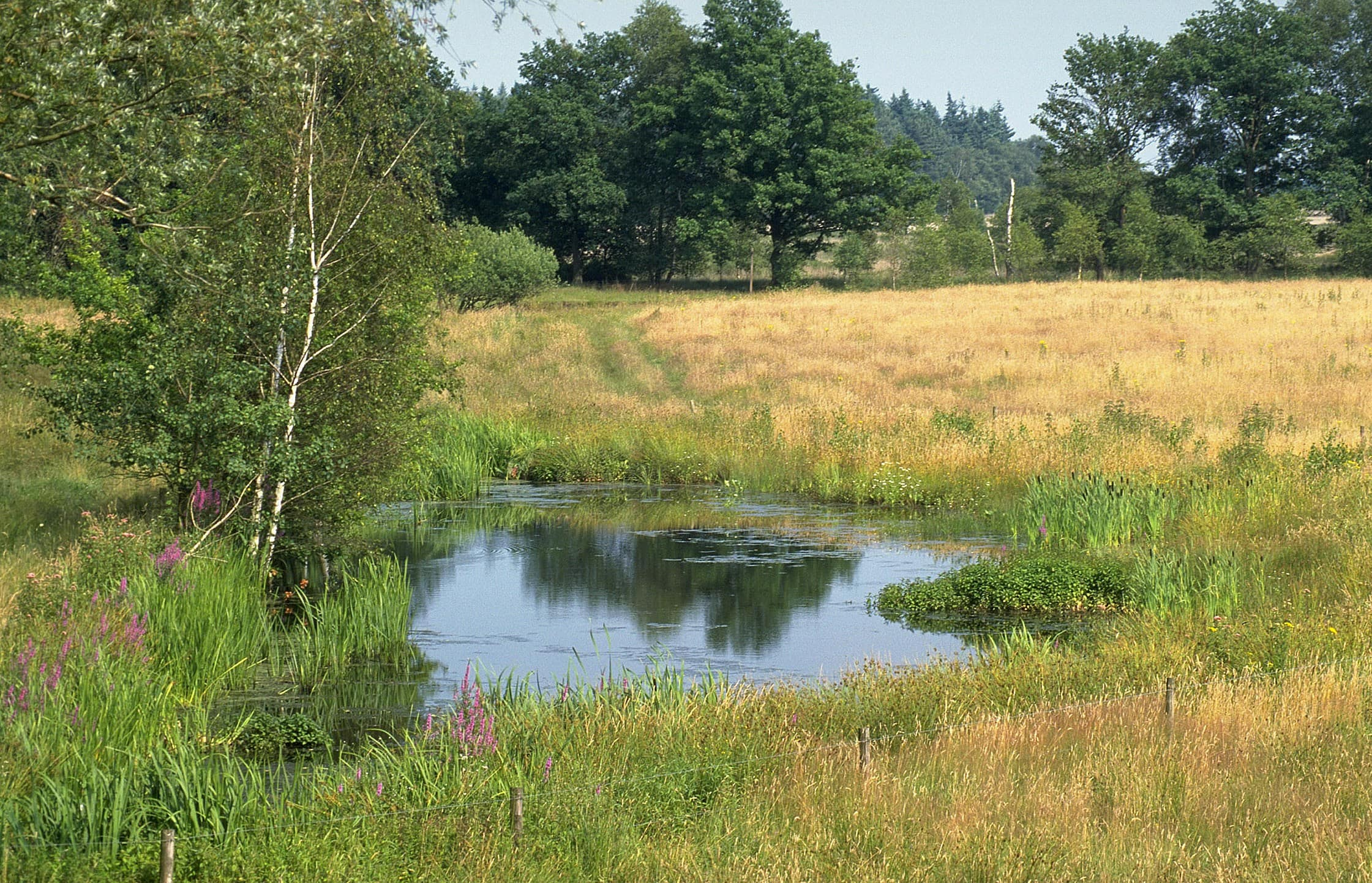 Poel - ecologische cursussen