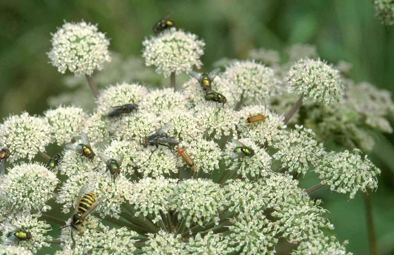 bloemen voor insecten