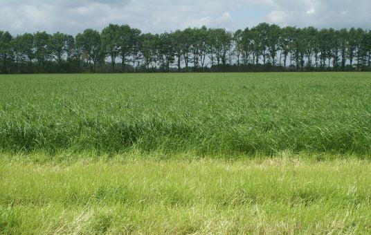 Intensief agrarisch grasland is een raaigraswoestijn zonder biodiversiteit. Engels raaigras kruidenloos