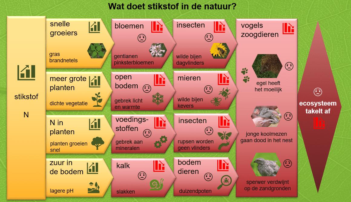 Schema stikstofeffecten in de natuur