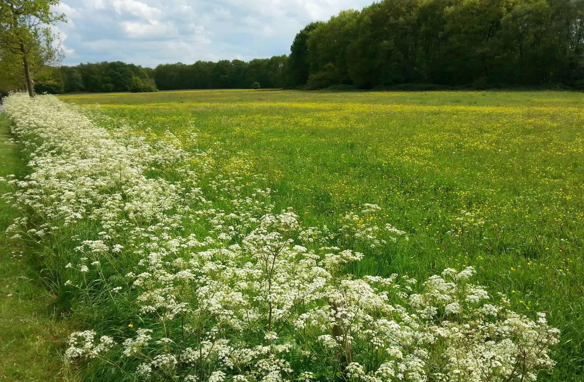 Bloemrijk grasland maaibeheer