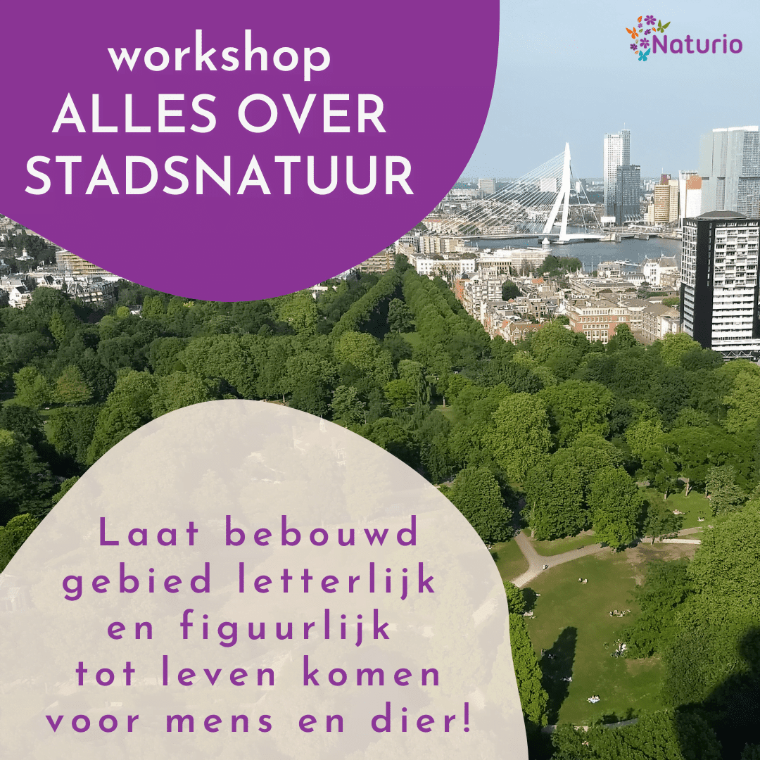 Workshop Alles over stadsnatuur